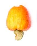 Tropische Acajoubaumfrüchte Lizenzfreie Stockfotografie