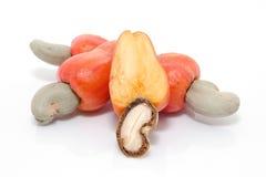 Tropische Acajoubaumfrüchte Lizenzfreie Stockbilder