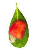 Tropische Acajoubaumfrüchte auf Blatt Stockfotos