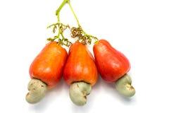 Tropische Acajoubaumfrüchte auf weißem Hintergrund Stockfotos