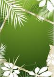 Tropische Achtergrond Royalty-vrije Stock Afbeeldingen