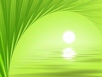Tropische achtergrond Royalty-vrije Stock Afbeelding