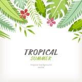 Tropische achtergrond Stock Afbeelding