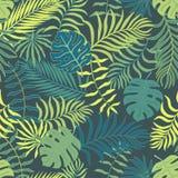 Tropische achtergrond met palmbladen Naadloos BloemenPatroon S Stock Foto's