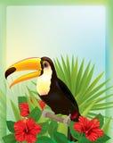 Tropische achtergrond met toekan Stock Afbeeldingen