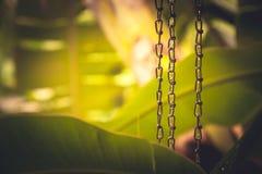 Tropische achtergrond met weelderig tropisch gebladerte tijdens tropische regen met regendalingen op kettingen in Chinese meditat stock afbeeldingen