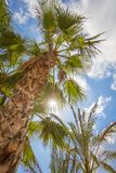 Tropische achtergrond van palmen over een blauwe hemel Royalty-vrije Stock Afbeeldingen
