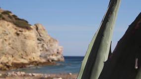 Tropische agaveinstallatie in voorgrond en klippen, oceaan en blauwe hemel op achtergrond tijdens eb met kleine golven stock footage