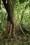 Tropische Amazonië van het wildernisdetail regenwoudboom Stock Afbeelding