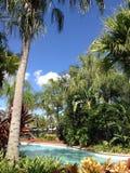 Tropische Anlage lizenzfreie stockbilder