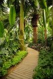 Tropische Anlagen stockfotos