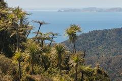 Tropische Anlagen, die auf Steigungen in Coromandel wachsen Lizenzfreie Stockfotografie