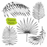 Tropische Anlagen Satz Vektorillustrationen mit tropischen Niederlassungen Handzeichnung für Design vektor abbildung