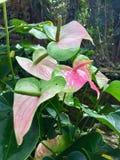 Tropische Anlagen in Thailand-Wald Stockfotos