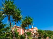 Tropische Anlagen und Familienhaus lizenzfreie stockbilder