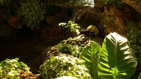 Tropische Anlagen und Kaskade im sch?nen Garten Verschiedene gr?ne tropische Anlagen, die nahe kleiner Kaskade mit frischem wachs stock video