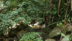 Tropische Anlagen und Kaskade im sch?nen Garten Verschiedene gr?ne tropische Anlagen, die nahe kleiner Kaskade mit frischem wachs stock video footage