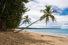 Tropische Ansicht stockbild
