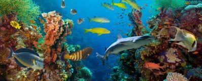 Tropische Anthias-Fische mit Nettofeuerkorallen und Haifisch lizenzfreie stockfotografie