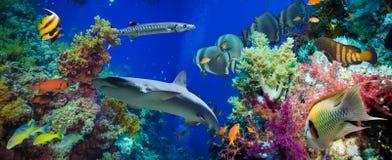 Tropische Anthias-Fische mit Nettofeuerkorallen und Haifisch stockbilder