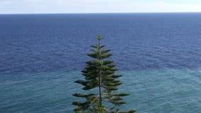 Tropische araucaria boom door het overzees stock video