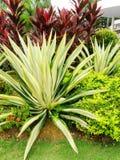 Tropische Artlandschaftsgestaltung Stockfotografie