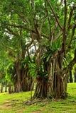 Tropische Bäume Stockfoto