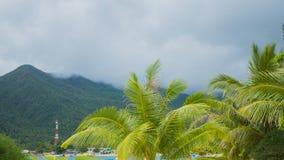 Tropische Bäume auf der Küste PHANGAN, THAILAND Stockbilder