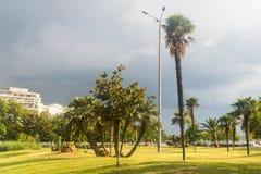 Tropische Bäume in der Stadt Stockbild