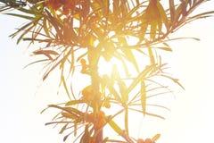 Tropische Baumform im Licht des hellen Sonnenscheins stockbild
