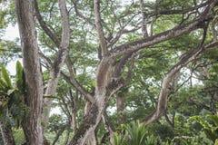 Tropische Baumniederlassungen Stockfotos