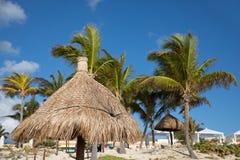 Tropische beachfront stock afbeeldingen