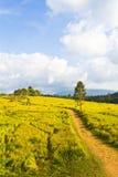 Tropische Bergketen, Thailand Royalty-vrije Stock Foto