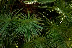 Tropische Beschaffenheit mit Palmblättern lizenzfreies stockbild