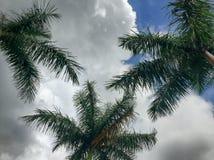 Tropische bewolkte dag Stock Foto