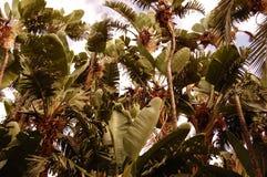 Tropische Blätter stockfotografie
