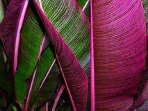 Tropische Blätter Stockfoto