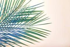 Tropische Blätter auf Pastellrosahintergrund stockbild