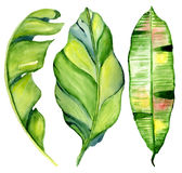 Tropische Blätter des Aquarells Lizenzfreies Stockbild