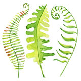 Tropische Blätter des Aquarells Stockfotografie