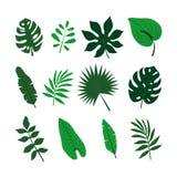 Tropische Blätter eingestellt Dschungelpalmblattsammlung lizenzfreie abbildung