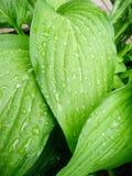 Tropische Blätter mit Regen Stockbild
