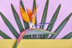 Tropische Blätter und Paradiesvogel blühen auf gelbem und rosa Pastellhintergrund Stockfotos