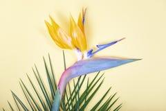 Tropische Blätter und Paradiesvogel blühen auf Pastellhintergrund Stockfoto