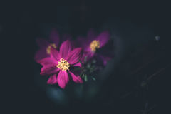 Tropische Blüte Stockfoto
