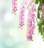 Tropische Blüte der Orchideenblume (Aerides-multiflora Roxb) - Blume Lizenzfreies Stockbild