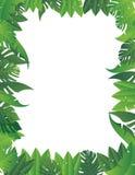 Tropische bladachtergrond Stock Afbeelding