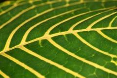 Tropische bladachtergrond Royalty-vrije Stock Afbeeldingen