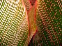 Tropische bladclose-up #1 Royalty-vrije Stock Afbeeldingen