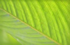Tropische bladclose-up Royalty-vrije Stock Afbeeldingen